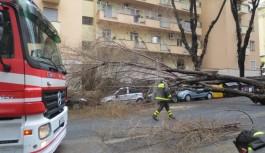Crolla un albero a Monteverde